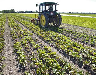 Nog geen verbod op landbouwgif imidacloprid