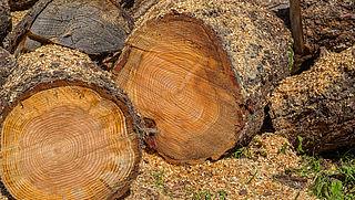 Zaterdag in Radar Radio: Wie moet betalen voor het kappen van een boom?
