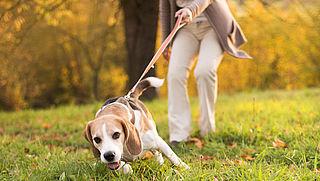 Schade door de hond van de buren: wie is aansprakelijk?