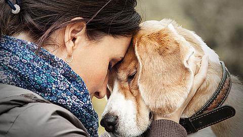Hondenbezitters bezorgd om anti-vlooienmiddel Bravecto}