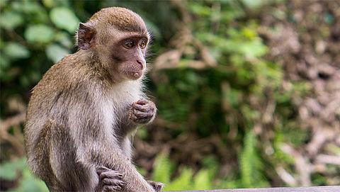Volkswagen maakt excuses voor uitlaatgasproeven met apen