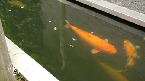 Radar checkt: Warmteregelaar gaart vissen in kweekvijver}