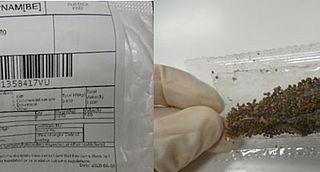 NVWA: Onbekend pakketje met plantenzaad ontvangen? Meld dit direct