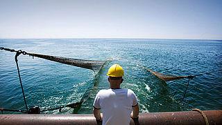 'Bijna de helft Europese visquota is te hoog'