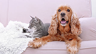 Zo zorg je dat je kat of hond minder haren verliest