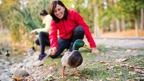 Mag je eenden en andere vogels voeren?