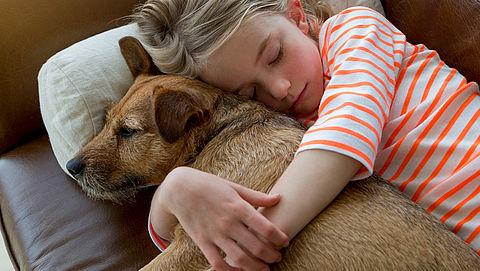 Wat kun je doen met je overleden huisdier?