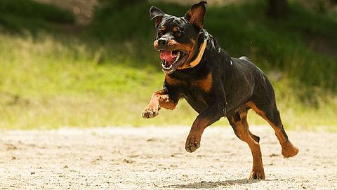 Hondenbescherming blij met nieuwe aanpak bijthonden}