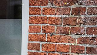 593 schademeldingen over aardbeving Groningen