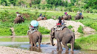 'Laat je niet verleiden tot een ritje op een olifant'