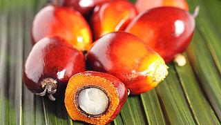 Weer meer palmolie ingevoerd