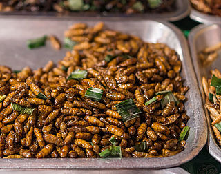 Insecten voor velen nog ver van het bord