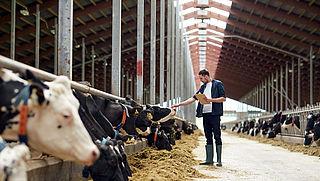 Zuivelproducten nog vaak van 'stalmelk' gemaakt