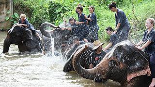 Reizigers krijgen waarschuwing voor dierenuitbuiting