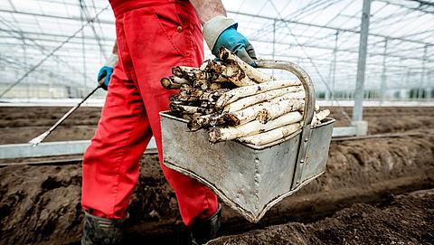 'Keurmerk voor duurzaamheid boerderijen en plantages schiet tekort'