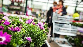 Nog steeds gevaarlijke pesticiden op planten in tuincentra