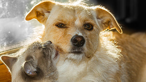 Wat dekt een dierenverzekering eigenlijk?}