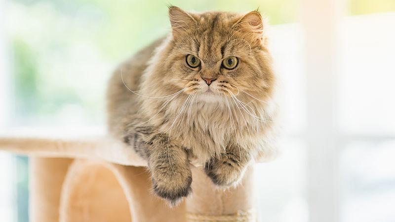Waarschuwing voor twee kattenfokkers