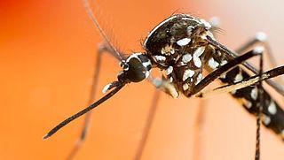 NVWA is verplicht informatie gevonden tijgermuggen te publiceren