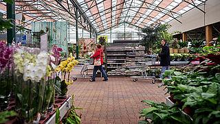 Tuincentra verkopen geen bestrijdingsproducten met glyfosaat meer