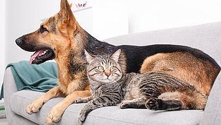 Zo maak je meubels en kleding vrij van katten- en hondenharen