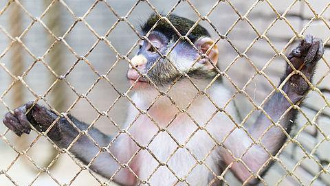 'Veel ongecontroleerde handel in exotische huisdieren'}
