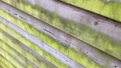 Groene aanslag verwijder je simpel en makkelijk met deze tien tips