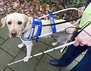 'Taxi laat blinde met hond geregeld staan'