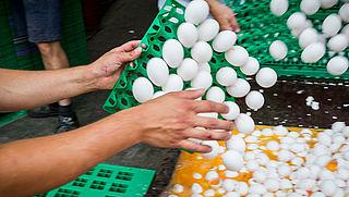 NVWA: '138 bedrijven met fipronil, geen besmette eieren meer in supermarkt'