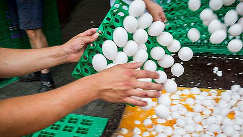 NVWA: '138 bedrijven met fipronil, geen besmette eieren meer in supermarkt'}
