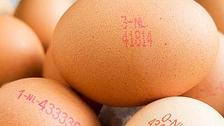 Eieren bevatten nog steeds fipronil