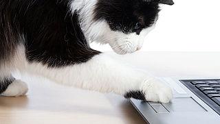 Databases met gegevens huisdieren en baasjes slecht beveiligd