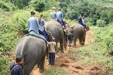 Meer mensen laten attracties met wilde dieren links liggen