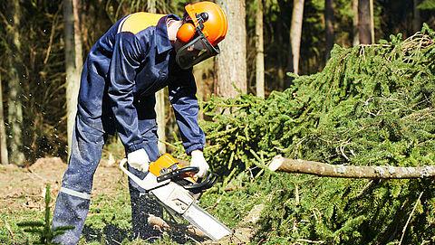'Oerbossen verdwijnen om wc-papier en zakdoekjes te maken'