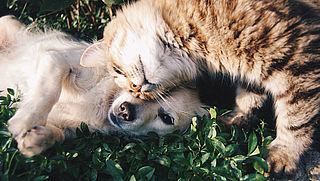 Heb jij een vraag over dierenverzekeringen?
