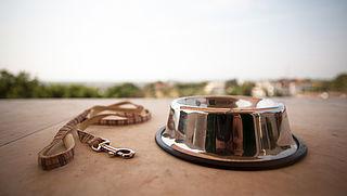 Hoog-risicohonden bijten vaker, blijkt uit analyse politieregistraties