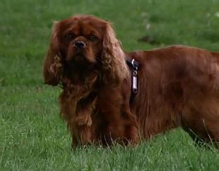 Malafide puppyhandel bloeit in Zuid-Nederland