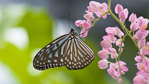 'Aantal insecten in Nederland neemt dramatisch af'}