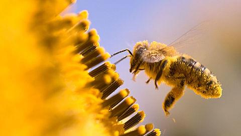 Verbod bijengif zonder zuiveringsinstallatie }