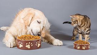 Hoeveel eten heeft mijn huisdier nodig?