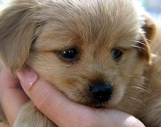 'Rauw hondenvoer is besmettingsrisico'