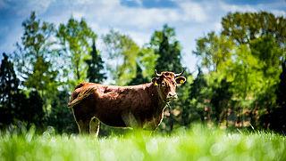 EU-hof: Strikte voorwaarden stikstofbeleid bij natuurgebieden