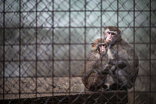 Dierenorganisaties pleiten voor sluiting proefdierencentrum BPRC