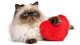 'Met valentijn verras ik mijn kat'