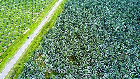 Hoe palmolie oerwoud, vrouwen en je gezondheid schaadt