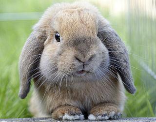 Virus velt tamme en wilde konijnen