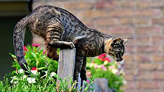 Zaterdag in Radar Radio: Wat kan je doen tegen de kattenverjager?