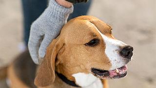 'Maak einde aan illegale handel huisdieren'
