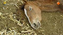 De waarheid achter paardenvlees