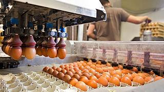 NVWA waarschuwt voor met salmonella besmette eieren